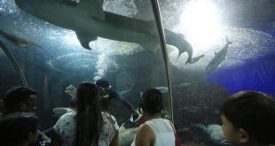 Underwater World in Singapore admits to security lapses